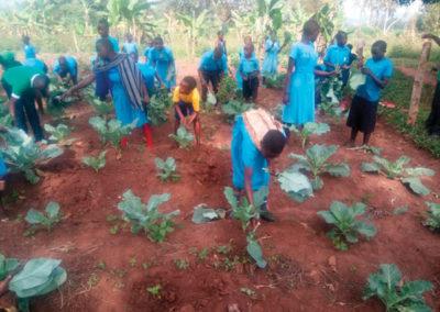 Special Feeding Program – Harvesting the field.