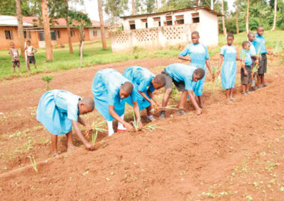 Special Feeding Program – Planting the field.
