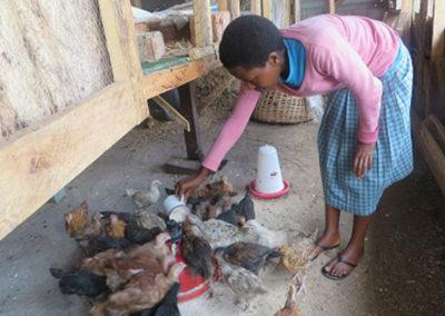 Special Feeding Program – A student teacher at St. Anthony Teacher College feeding community chicks.